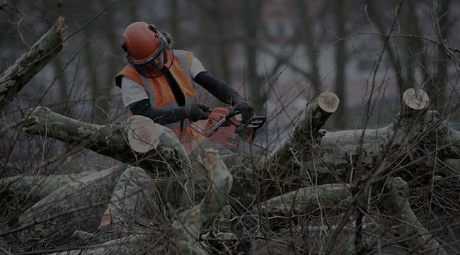 Abbotsford Tree Service